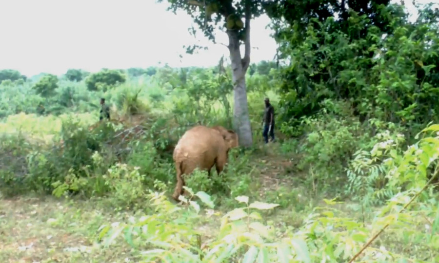 babyelephant2 px 900 19 05
