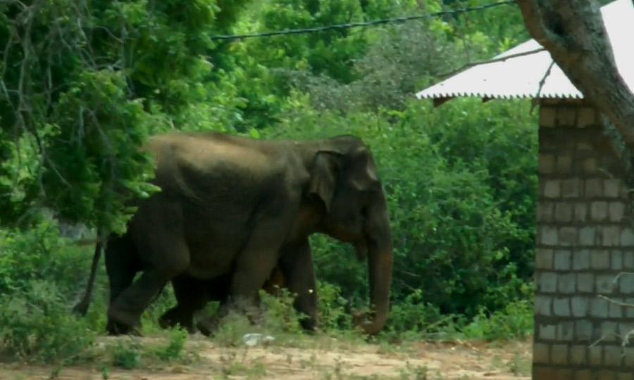 babyelephant3 px 900 19 05